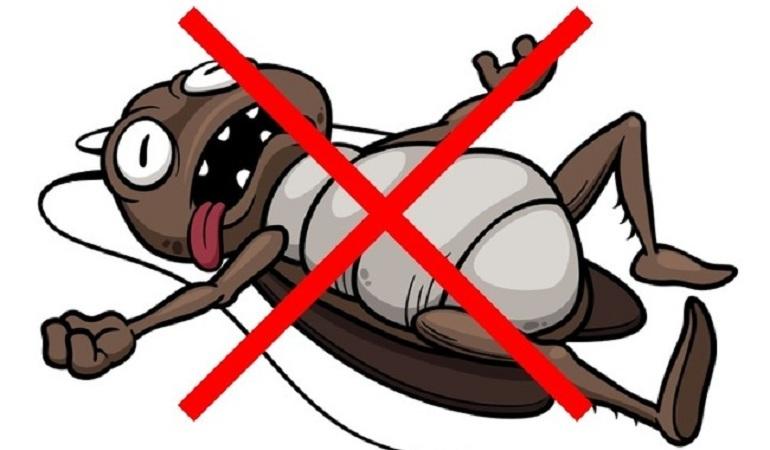10 phương pháp diệt côn trùng an toàn không dùng đến hóa chất