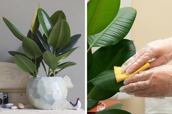 15 loại cây cảnh trồng trong nhà giúp cải thiện sức khỏe-10