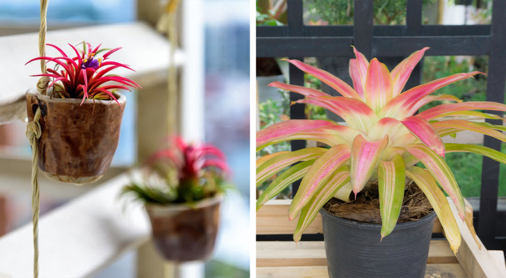 15 loại cây cảnh trồng trong nhà giúp cải thiện sức khỏe-11
