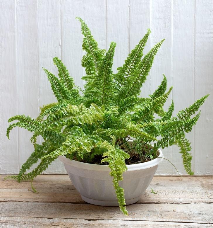 15 loại cây cảnh trồng trong nhà giúp cải thiện sức khỏe-13