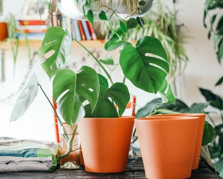 15 loại cây cảnh trồng trong nhà giúp cải thiện sức khỏe-15