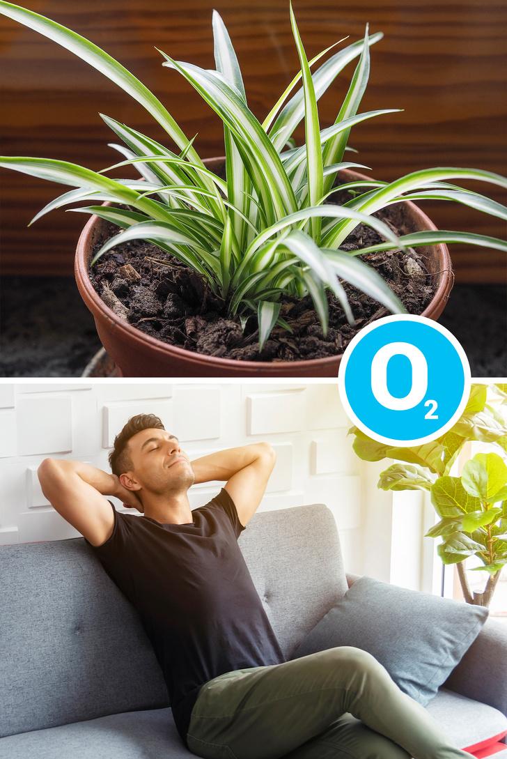 15 loại cây cảnh trồng trong nhà giúp cải thiện sức khỏe-2