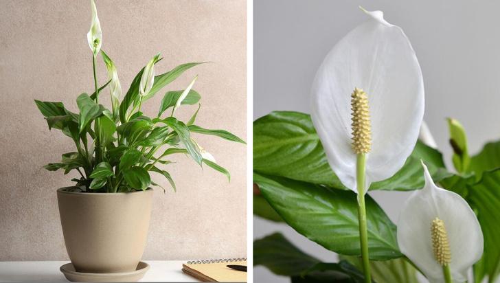 15 loại cây cảnh trồng trong nhà giúp cải thiện sức khỏe-3