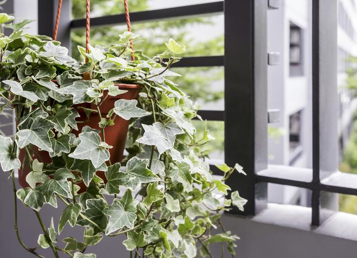 15 loại cây cảnh trồng trong nhà giúp cải thiện sức khỏe-6