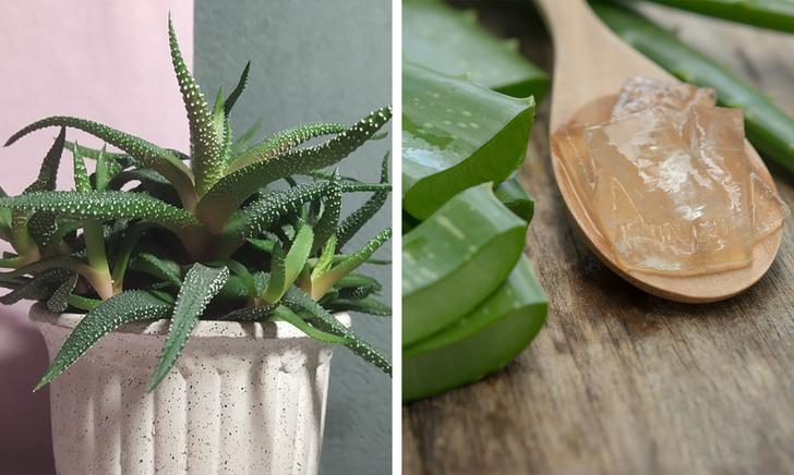 15 loại cây cảnh trồng trong nhà giúp cải thiện sức khỏe-8