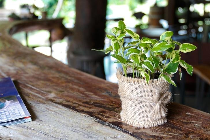 15 loại cây cảnh trồng trong nhà giúp cải thiện sức khỏe-9