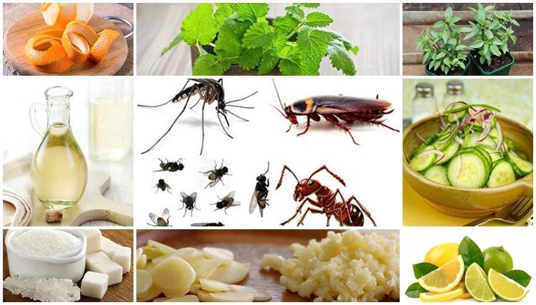 Cách đuổi ruồi muỗi kiến gián cực nhạy mà an toàn